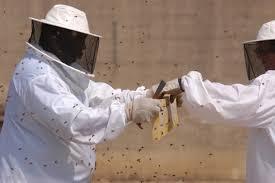 beekeeping resources u2014 chicago honey co op