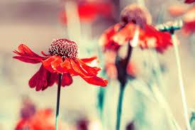Flower Gardens Wallpapers - flowers gardens wallpapers for desktop full size best free