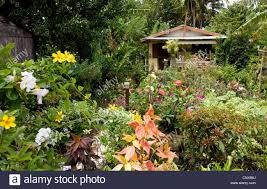 cottage garden flowers cottage garden filled with colourful exotic tropical flowers and