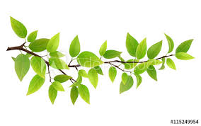 small tree branch with green leaves detailed vector plant isolated