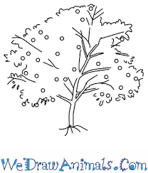 how to draw a peach tree
