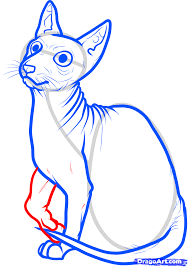 how to draw a sphynx cat step by step pets animals free online