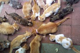 who does this kittenz every were pinterest cat feral cats