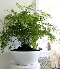Indoor Plant Arrangements 1054 Best House Plant Decor Images On Pinterest Plants