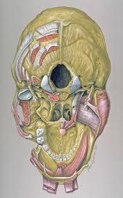 Base Of The Skull Anatomy File Skull Base Anatomy Jpg Wikimedia Commons