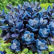 Patio Plants For Sun Best 25 Full Sun Plants Ideas On Pinterest Full Sun Flowers