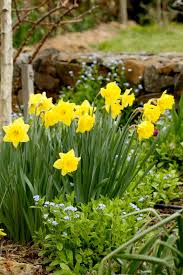 homelife 11 best spring flowers
