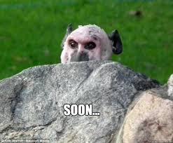 Baboon Meme - soon baboon memes quickmeme