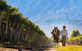 Light And Landscape - argentina light art and wine in gaucho country telegraph