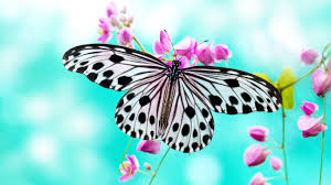 interior gorgeous pink butterfly wallpaper and home background