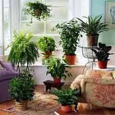 decorative indoor plants decorative indoor plants sri amirtha nursery farm manufacturer
