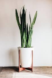 plant stand large indoort stands loft bathroom cement best