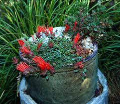 Flower Pot Arrangements For The Patio Native Plant Gardens In Containers California Native Plant Society