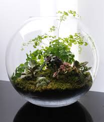 blown glass terrarium containers terrariums fish bowl gardening