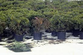 Methods Of Controlling Plant Diseases - diagnosis and control of phytophthora diseases pacific northwest