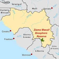 Gambia Africa Map by The Ziama Massif A Relic Of The Diminishing Upper Guinean Forest