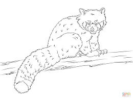 red panda coloring pages red panda coloring pages chuckbutt draw 5077