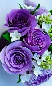 Girls Favourite Flowers - purple flowers that cristos touched at brooke u0027s house in water u0027s