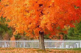 autumn u0027s array colorful foliages garden delights plant