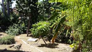 native plant garden a new native plant garden in haiti an oasis for biodiversity and