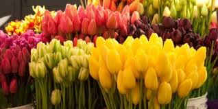 cincinnati florists cincinnati florist highlights 5 must summer flowers for your