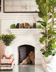 11 crazy cool house plants trending in 2016 brit co