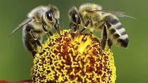 Backyard Beehive A Buzz Over Backyard Beehives