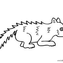 snow leopard coloring pages hellokids