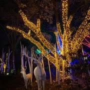 houston zoo lights coupon zoo lights 199 photos 99 reviews festivals 6200 hermann park