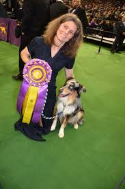 australian shepherd 2015 westminster the 140th annual westminster kennel club dog show