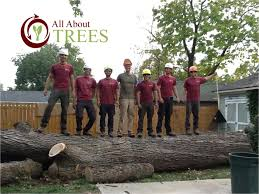 contact your tree company in springfield missouri