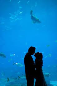 Georgia Aquarium Floor Plan by 123 Best Georgia Aquarium U003c3 Images On Pinterest Georgia