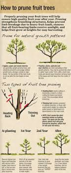 best 25 pruning plum trees ideas on plum tree care