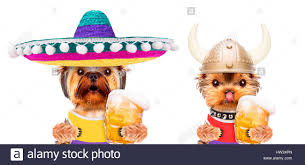 funny beer cartoon funny dogs holding glass of beer stock photo royalty free image