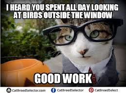 Business Cat Memes - business cat memes cat breed selector