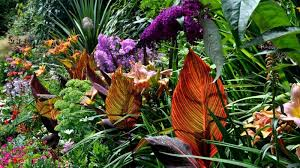 sensational idea tropical garden design harmonious mix of ferns