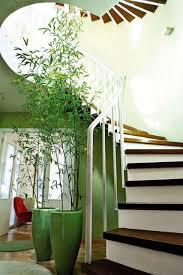 fashionable plants for decoration home idea set on beside modern