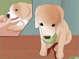 comment empecher chien de monter sur le canapé 3 ères de empêcher un chiot de mordiller wikihow