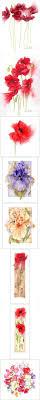 jan harbon watercolour маки pinterest watercolor paintings