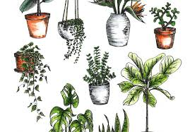 indoor plant how to care for indoor plants a pair a spare