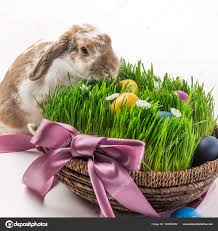 easter basket grass rabbit basket grass painted different colors eggs easter concept