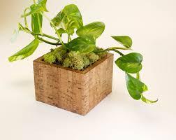 indoor modern planters modern planter indoor planter succulent planter cactus reclaimed