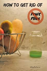 3 ways to get rid of pesky fruit flies 100 days of real food