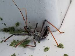 entomology identification of fuzzy insect in pennsylvania