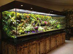 paludarien im schrank aquarium pinterest aquariums fish