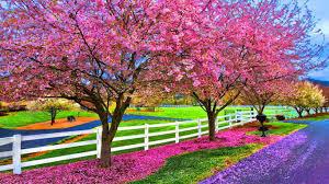 high def desktop backgrounds springtime hd desktop wallpaper high definition fullscreen
