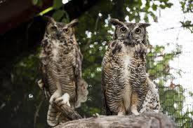Hutch News Classifieds Hutchinson Zoo Asks For Public Opinion On Owl Names News The
