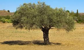 137 royalty free olives images minimum size 1080p peakpx