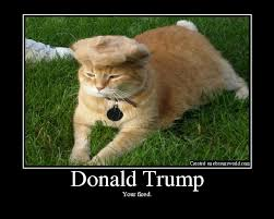 Mean Kitty Meme - trump your cat know your meme