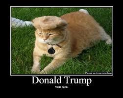 Mean Cat Memes - trump your cat know your meme